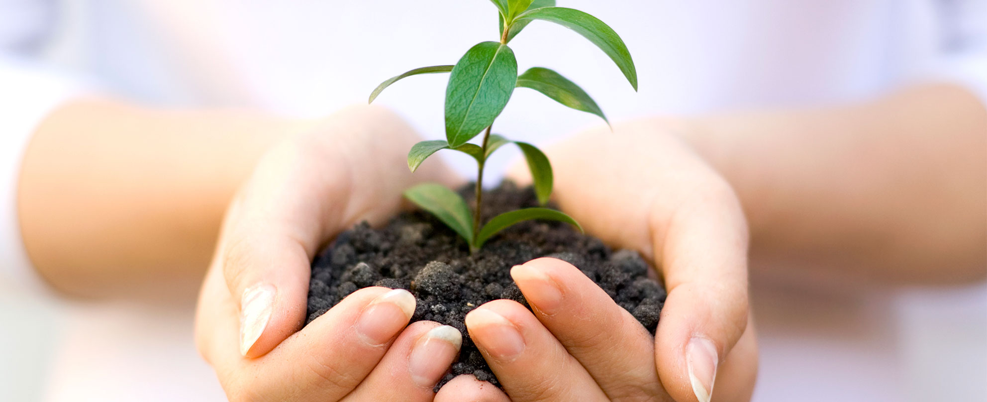 Hands nurturing growing plant